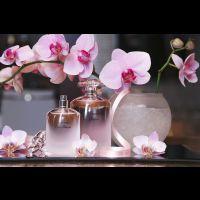 La bellezza secondo Shiseido a Venezia