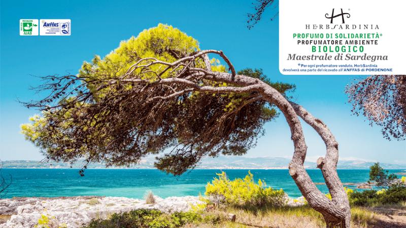 Profumo di solidarietà: Maestrale di Sardegna